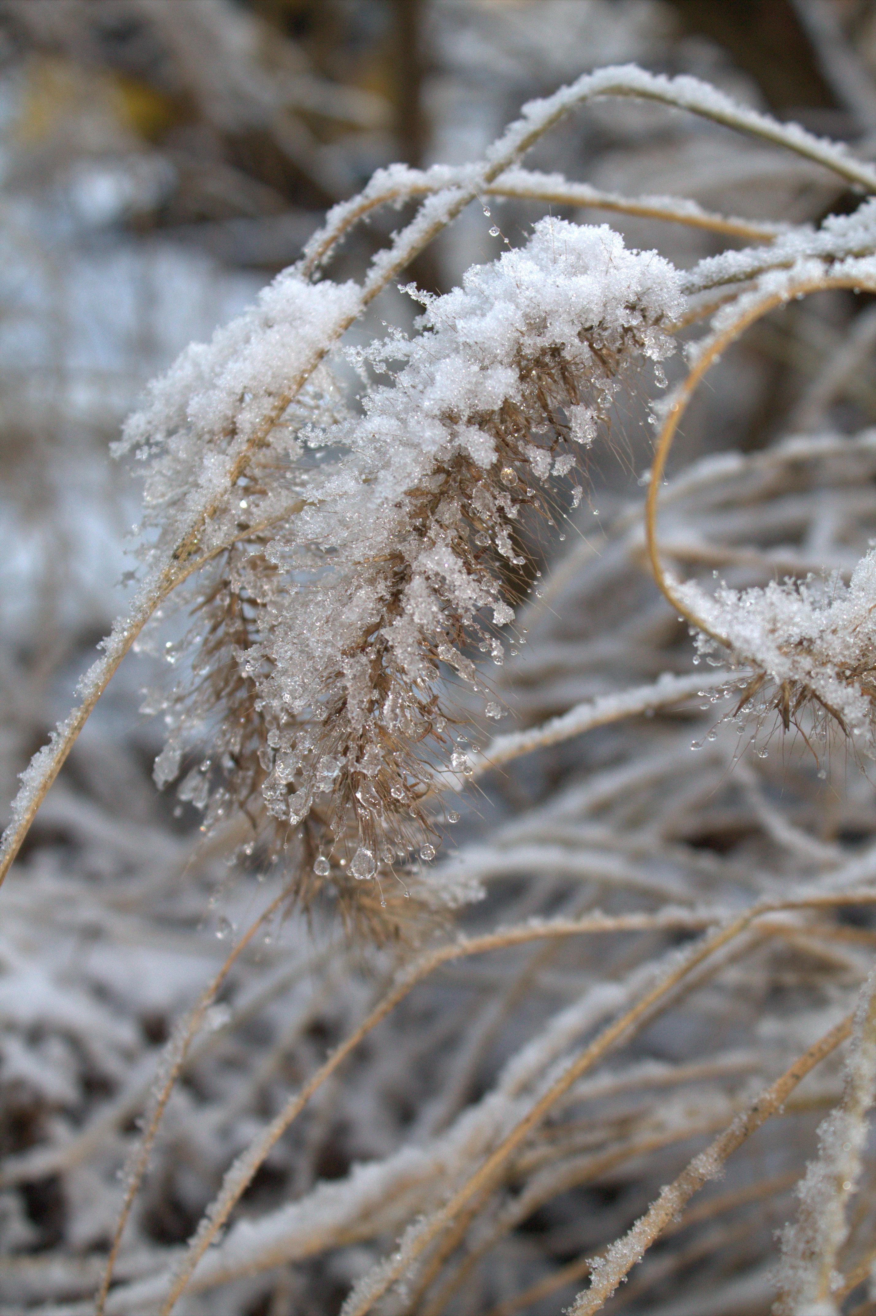 Winterlich eingelegte Pflaumen und Zwetschgen